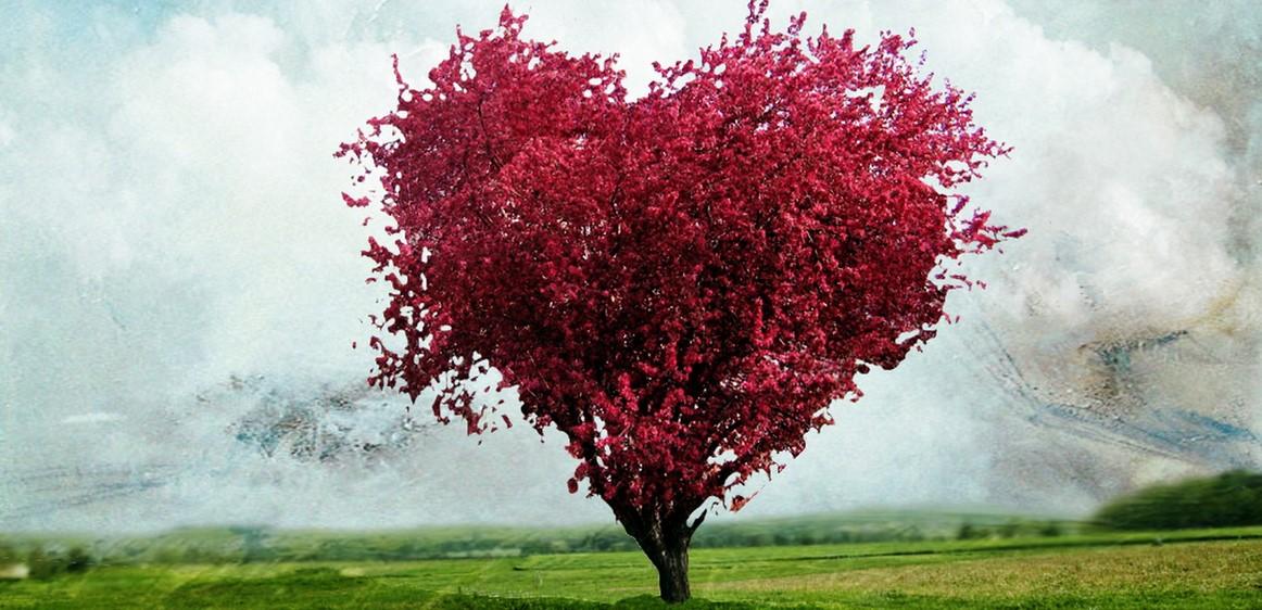 Cinco dias de reflexão com Sementes do Coração