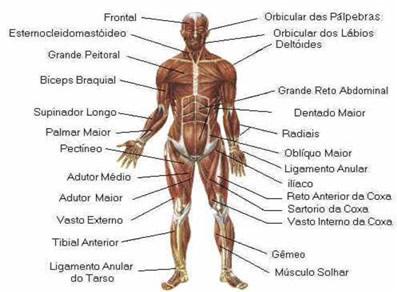 O tratamento de um problema muscular, mesmo que simples, envolve um grande trabalho com Reiki, observando e cuidando os corpos físico, mental e emocional.