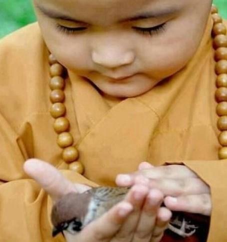 Karuna significa compaixão