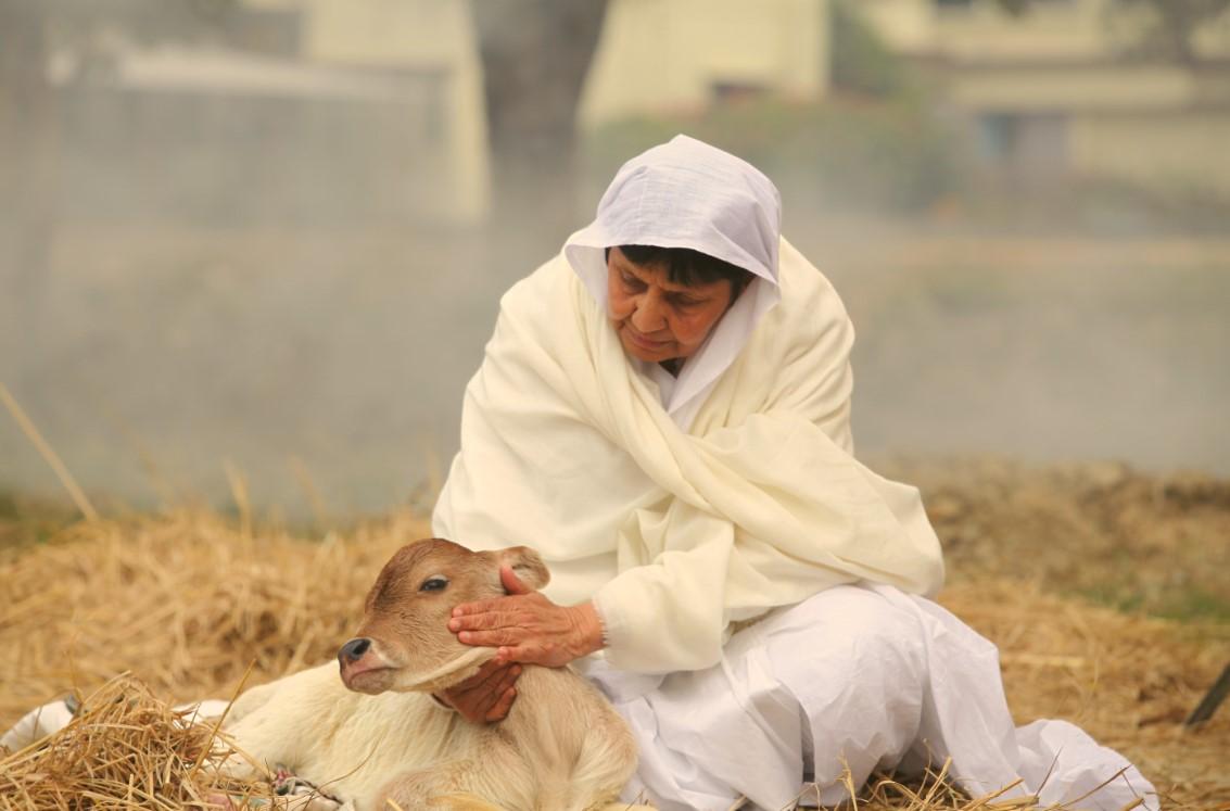A compaixão e a conivência